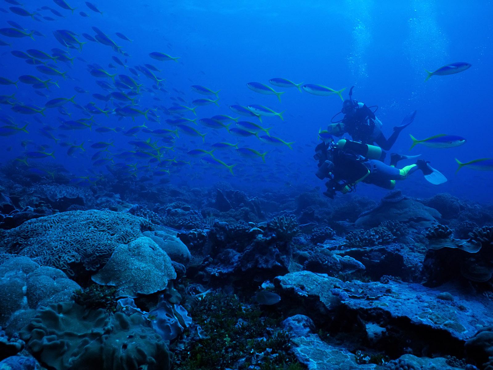 海底世界 鱼类写真壁纸 第01辑